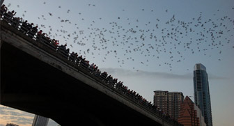 Bats flying off Congress Bridge